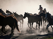 A woman rider in a western roundup corals horses.