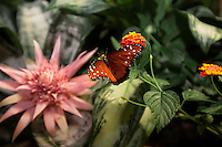 Butterfly prepares to land on flower at interactive walk-in exhibit at Smithsonian Natural History Museum, in Washington, D.C. Copyright 2016 Reid McNally.
