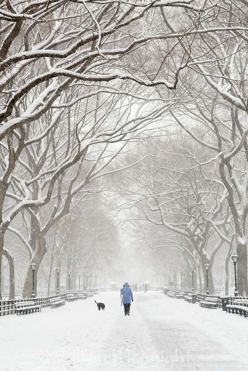 Woman walking her dog on The Mall in <br /> Central Park, New York City in winter