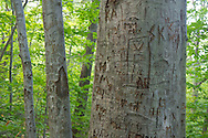 Vernon, New Jersey - Initials carved in trees along the Appalachian Trail on Wawayanda Mountain on Sept. 22, 2012.