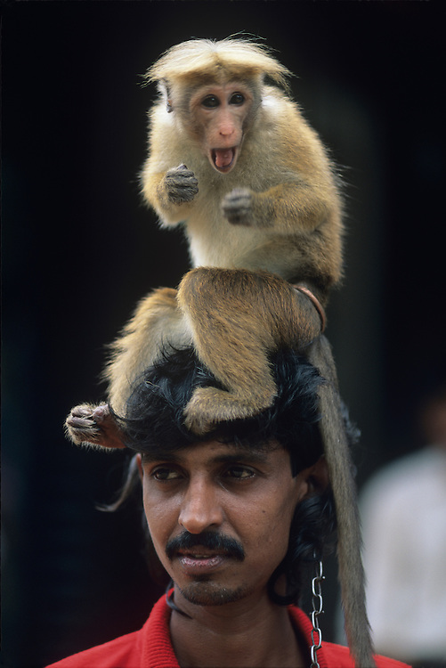 (MR) Sri Lanka, Performer with trained monkey in town of Kegalle