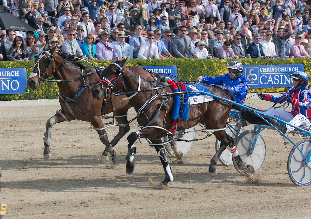 Ardern Rooney driven by Kerryn Manning, right, wins the New Zealand Trotting Cup at the New Zealand Trotting Cup Day, Addington Raceway, Christchurch, New Zealand, Tuesday, 10 November, 2015.<br /> Credit:SNPA / David Alexander