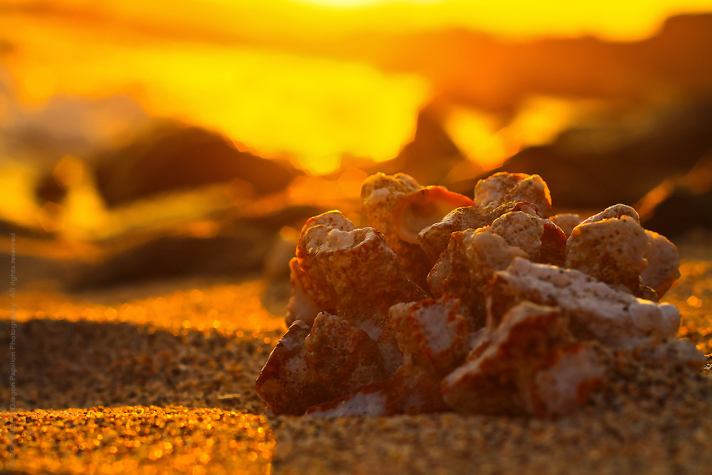 nature photography: piece of coral against a vivid sunset background