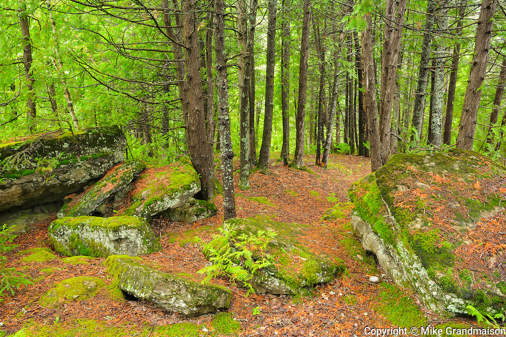Interior of boreal forest <br /> Val-Jalbert<br /> Quebec<br /> Canada