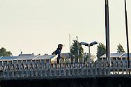 """Roma 7 Settembre 2014<br /> Protesta al Cie di Ponte Galeria contro i lunghi tempi di permanenza nella struttura del centro di identificazione ed espulsione. Gli   immigrati """"ospiti"""" del centro di identificazione ed espulsione sono saliti sul tetto della struttura e gridano: """"Liberi, liberi"""". Carabiniere in tenuta antisommossa, corre sul tetto per fermare gli immigrati<br /> <br /> Rome September 7, 2014 <br /> Protest the Center for Identification and Expulsion (CIE) for immigrants from Ponte Galeria in Rome, against the long residence time in the structure of the center for identification and expulsion. Immigrants 'guests' of the center for identification and expulsion climbed on the roof of the structure and cry: """"Free, free."""" Policeman in riot gear, runs on the roof to stop migrants"""
