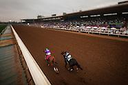 2015 Horse Racing