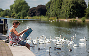 © Licensed to London News Pictures. 17/07/2014. Kingston Upon Thames, UK. A woman reads a newspaper on the river bank. People and animals in the sunny hot weather on the banks of the River Thames at Kingston Upon Thames today 17th July 2014. Photo credit : Stephen Simpson/LNP