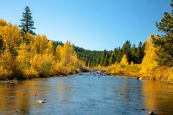 """Little Truckee River in Autumn 3"" - Autumn photograph of yellow cottonwood trees along the Little Truckee River near Stampede Reservoir."