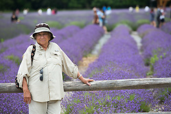 tourists at a lavender farm on Long Island