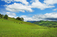 Grazing pastures on the rolling hills of the Umpqua River Valley Oregon