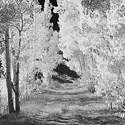 North Lake Road - Infrared Black & White
