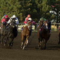 Horses round corner three during the fourth race of the season opener at Canterbury Park in Shakopee, Minnesota on Friday, May 18, 2001.  Canterbury park is expecting the biggest year this year with record setting purses and more applications for stable space than they can meet.(AP Photo/Adam M. Bettcher)