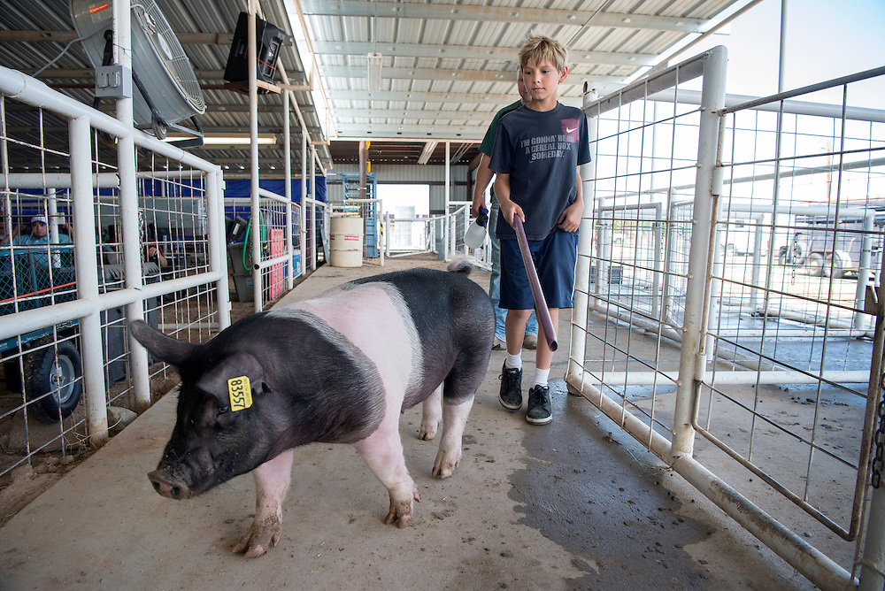 Jason Bertrand, 11, from Edgewood, guides the pig he is entering in the Santa Fe County Fair to its pin, Tuesday, Aug. 2, 2016. The fair started this week and runs through Sunday at the Santa Fe County Fairgrounds. Events include competitions in rabbit shows, poultry, lamb, goats pigs and more. There are also indoor exhibits, demonstrations and music.   (Eddie Moore/Albuquerque Journal