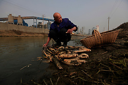 Chinese villager Dong Chongxin of Dongtan Village washes lotus roots in a polluted river where across is the Jinhuarun Chemical Industry plant in Zekou Town, Qianjiang City of Hubei Province, China 15 January 2013. Dong used to breed fish in fishing ponds by the river but now the water is so polluted from discharge from the chemical plant that all the fish have died and the ponds are now just muddy swamps where only lotus roots will grow in them.While the heavy smog in Beijing and much of northern China in recent days have caused alarm among residents and renewed scrutiny on the pollution woes of the country, villagers in a small town of Hubei Province have been grappling with severe air, water and noise pollution on a daily basis over the past two years. China's Xinhua news reported 04 January 2013 that more than 60 cancer deaths in various villages of Zekou Town has been caused by the heavy pollution from the chemical industry park nearby. About 20 or more chemical plants built around the villages of Dongtan, Xiangnan, Zhoutan, Sunguai, Qingnian and others over the past two years has created huge increases in noise, air and water pollution. Many villagers complained of intensifying respiratory, heart, skin and circulatory illnesses caused by the pollution and a large spike in cancer diagnoses and deaths since the factories were built. .