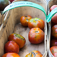 A basket of  'Sasha's Altai' heirloom tomatoes