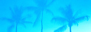 Bahama Palms