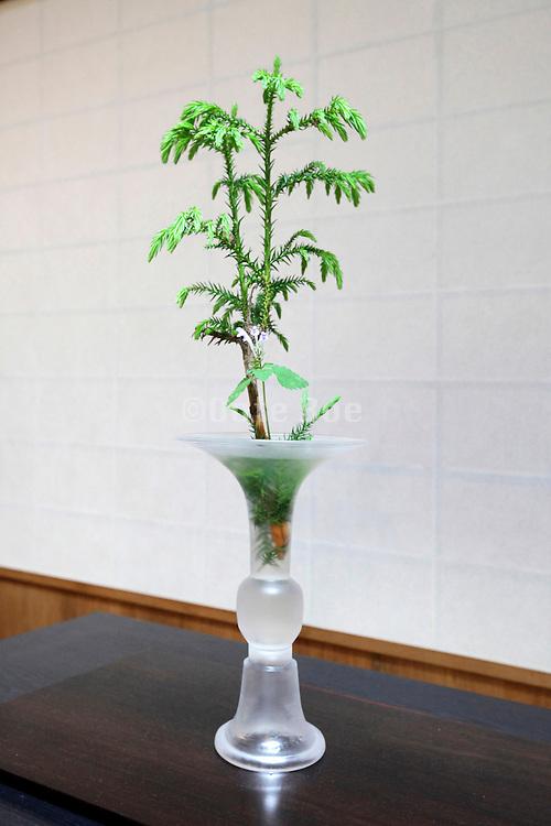 Ikebana with green twig - vase by Japanese glass artist Kentaro Senuma