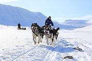 Tourists dog sled in April near Longyearbyen, Svalbard, Norway.