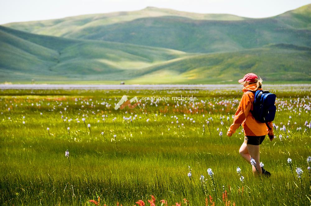 Woman hiking through a field of wildflowers during spring, Camas Prairie, Fairfield, Idaho.