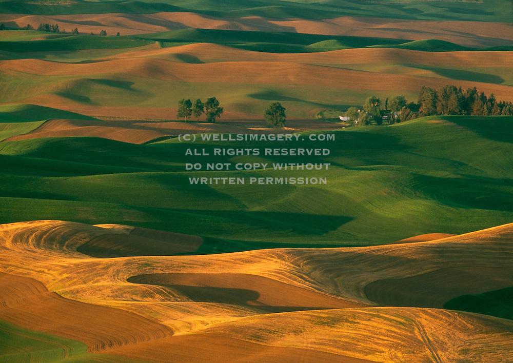 Image of wheatfields in the Palouse, eastern Washington, Pacific Northwest