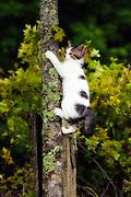 Kitten climbing tree