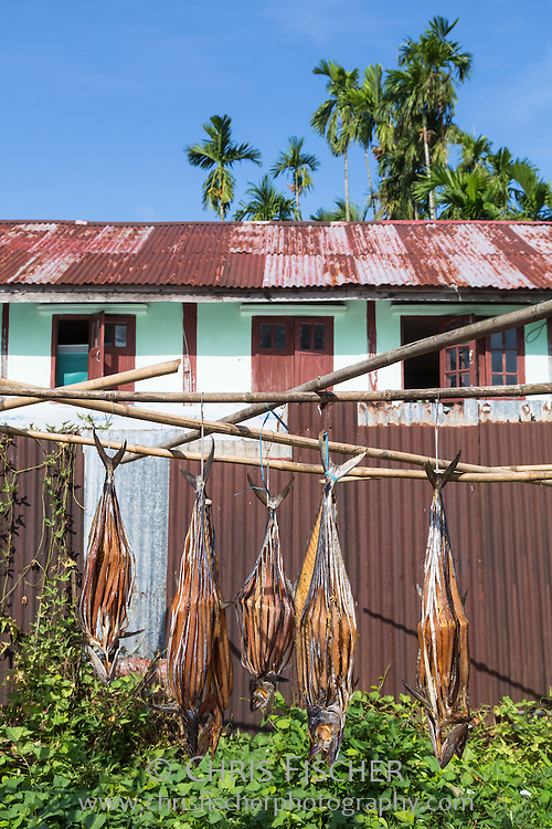 Fish drying in Sittwe, Myanmar. Locals preserve fish by slicing and drying for a week, without the use of salt or any preservatives.