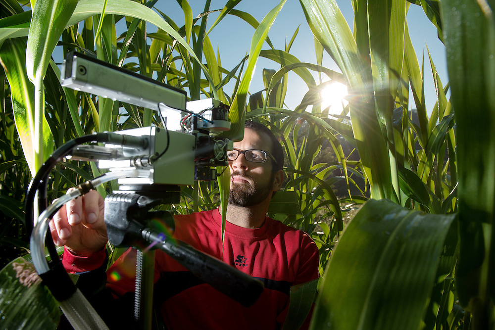 Graduate student Jonathan Grennell measures photosynthesis produced by a sorghum plant at a research plot at the Ridges. Voinovich School of Leadership and Public Affairs Associate Professor Sarah Davis and her students are meauring the carbon footprints of a variety of species of plants for potential applications as a source of biofuel. Photo by Ben Siegel