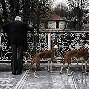 Jean-Marie Le Pen, the french leader of the far right-wing and nationalist politician, is standing at his balcony with his two dogs.  Saint-Cloud, France - January 26th 2009.
