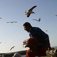 Morocco, Essaouira, fishermen port and fortifications