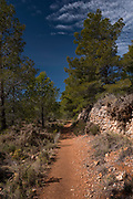 Trekking path in Puig Campana pine forest, Finestrat,Alicante province, Spain