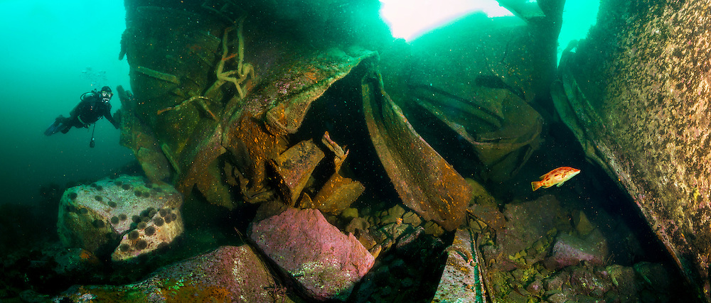 Underwater panorama of a diver and a pigfish on the Rena shipwreck bow thruster wreckage in about 15m of water. Astrolabe reef. The underwater panorama is made up of six images that were stitched into a panorama.
