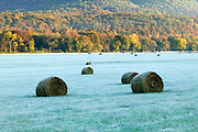 Hay rolled in bales on a farm in Arkansas during Autumn in the early morning frost