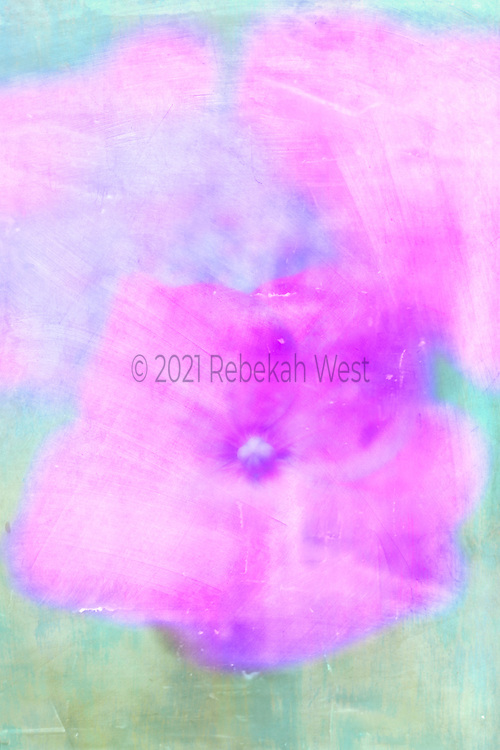 Single fuschia five petaled flower super close up sits down center in vertical field stretching from side to side, background soft yellow and blue green with two other fields of fuschia, watercolor, iridescent, flower art, high resolution, licensing, 3744 x 5616
