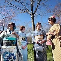 Nederland, Amstelveen , 25 maart 2012..Met Sakura (Cherry Blossom Festival), vieren Japanners de komst van het voorjaar. Daarbij is het een traditie om met vrienden en familie van een heerlijke picknick te genieten, zittend onder de bloesembomen. Bloemen (en natuur in het algemeen ) hebben in Japan een symbolische waarde. De kersenbloesem geeft een nieuw begin aan, maar verwijst tegelijkertijd op een subtiele manier naar de instabiliteit van het leven. Jaarlijks in de maand maart of april wordt in Amstelveen het Cherry Blossom Festival georganiseerd..Op de foto Japanse en niet Japanse jonge dames in traditionele klederdracht (kimono) voor de tot nu toe enige bloeiende kersenboom wachten op de officiele traditionele openingsspeech van het festival (l) in het park..Foto:Jean-Pierre Jans