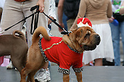 9th Annual Pooch Parade at Alamo Heights, April 29, 2007.  Photo copyright 2007 Lance Cheung