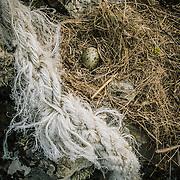 Gulls Egg, Laig bay, Isle of Eigg