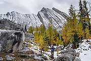 Mount Chester rises above the Elephant Rocks and yellow larch trees in Peter Lougheed Provincial Park, Kananaskis Country, Alberta, Canada. The Elephant Rocks are beautifully eroded limestone blocks of the Livingston Formation that have tumbled from slopes above. Chester Lake is a delightful hike of 5.2 miles round trip with 1000 ft gain through larch forest. Extending the hike to Three Lakes Valley is 7.8 miles RT with 1800 ft gain to a lake-dotted limestone barrens. Kananaskis Country is a park system in the Canadian Rockies west of Calgary.