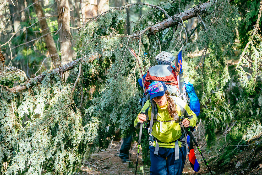 Shannon Mahre breaks her way through the start of dozens of fallen trees along the Sperry Trail.