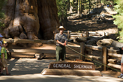 A National Park Service Park Ranger provides a tutorial about the history of General Sherman, a Giant Sequoia in Sequoia National Park, California, USA that is the world's largest tree (by volume) and the world's largest known single living organism.