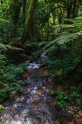The rainforest and a small stream in Biwindi Impenetrable National Park, Uganda.