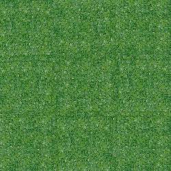 Tuft of soft grass or wheat grass carpet