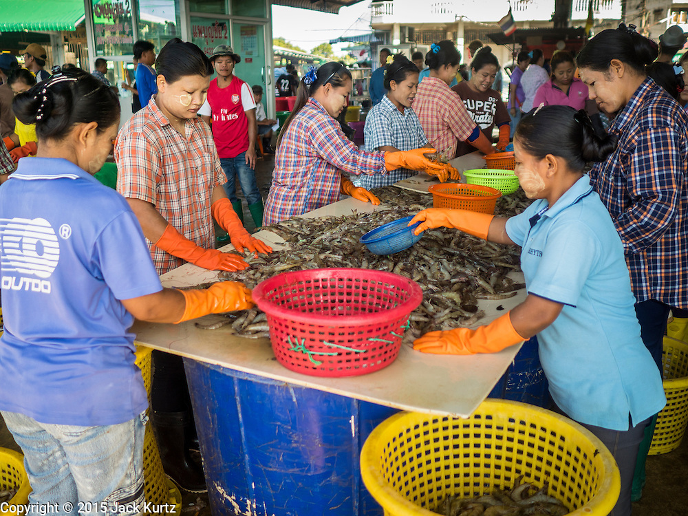 """11 JUNE 2015 - MAHACHAI, SAMUT SAKHON, THAILAND:  Burmese migrant workers at the Samut Sakhon shrimp market clean and process farm raised shrimp. Labor activists say there are about 200,000 migrant workers from Myanmar (Burma) employed in the fishing and seafood industry in Mahachai, a fishing port about an hour southwest of Bangkok. Since 2014, Thailand has been a Tier 3 country on the US Department of State Trafficking in Persons Report (TIPS). Tier 3 is the worst ranking, being a Tier 3 country on the list can lead to sanctions. Tier 3 countries are """"Countries whose governments do not fully comply with the minimum standards and are not making significant efforts to do so."""" After being placed on the Tier 3 list, the Thai government cracked down on human trafficking and has taken steps to improve its ranking on the list. The 2015 TIPS report should be released in about two weeks. Thailand is hoping that its efforts will get it removed from Tier 3 status and promoted to Tier 2 status.        PHOTO BY JACK KURTZ"""