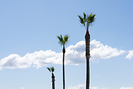 Photo Manhattan Beach wall art. Clouds, blue sky, palm trees. Southbay, El Porto, Southern California beach landscape. Matted print, limited edition. Fine art photography print.