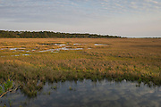 Salt Marsh<br /> Little St Simon's Island, Barrier Islands, Georgia<br /> USA