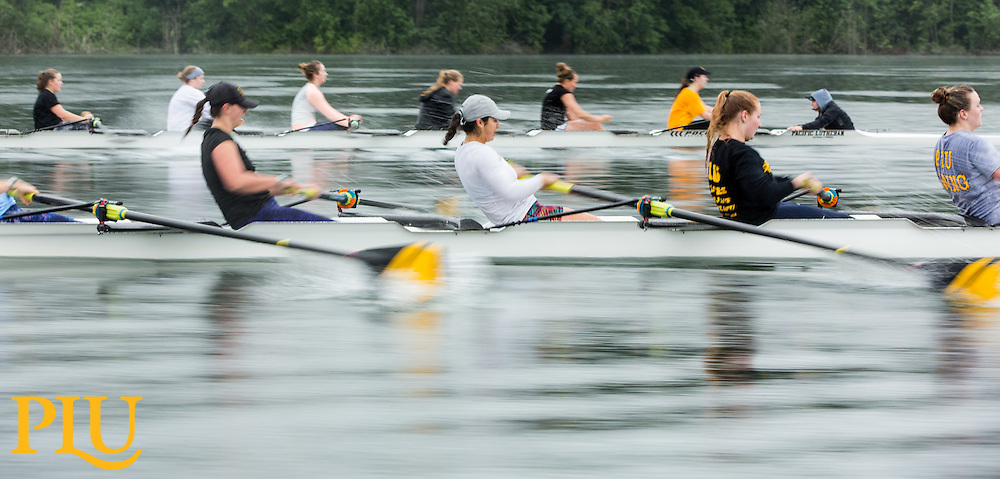 PLU Women's rowing training on American Lake in Lakewood, Washington on Saturday, May 21, 2016. (Photo: John Froschauer/PLU)