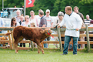 The Angus Show, Brechin, Saturday 8th June, 2013. Parade of stock.