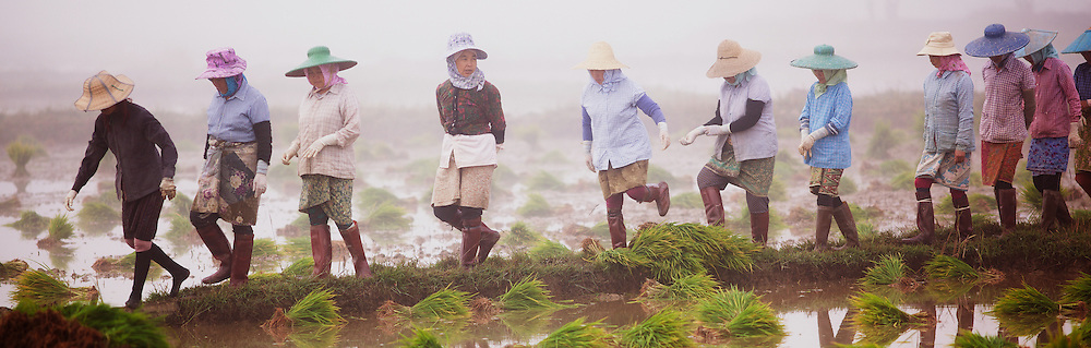 Woman walking out to rice fields to start their day of planting rice, Kyaing Tong
