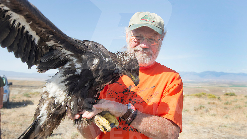 Raptor Biology, Marc Bechard with USGS team above Snake River, Golden Eagle radio attachment, John Kelly photo
