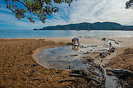 We had a slow start with a beach meander in Katherine Bay, the boys immediately started building dams. Great Barrier Island.