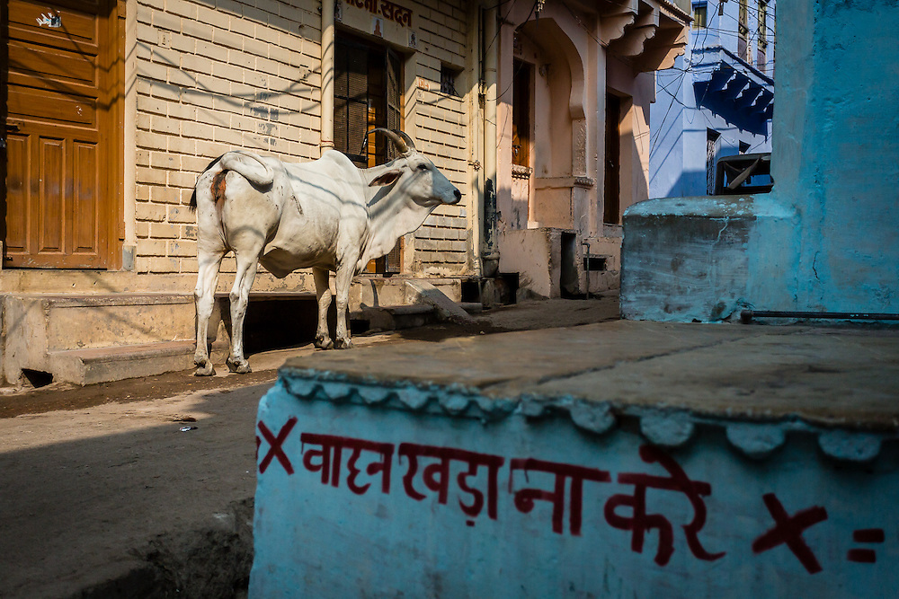 In the narrow streets of Bundi, as in many other streets of Rajasthan, and other provinces of India, the cows are everywhere. Cows are, after all, sacred animals to the Hindu religion